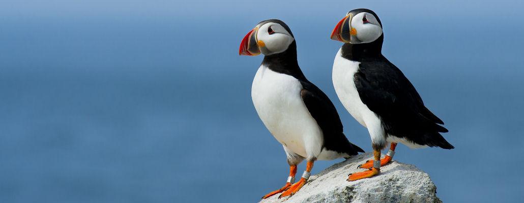 HEADER,pair of birds